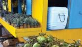 Antigua and Barbuda looks to cash in on fruit appeal